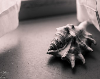 Seashell on the window sill 11x14 matted photograph, Fine art