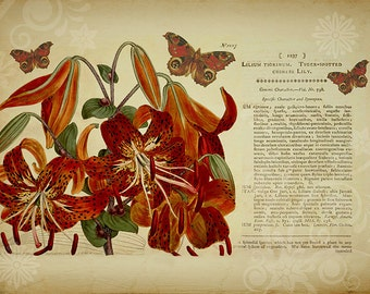 Botanical Print, Tiger Lily, Flower Art, Botanical Art, Lilies, Garden Decor, Vintage Floral, Autumn Colors, Butterfly, Gift for Gardener