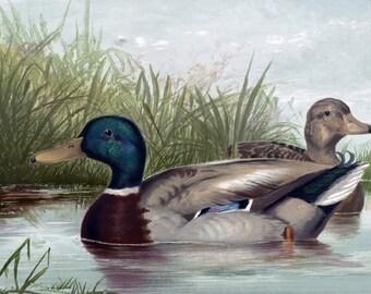 Ducks on the Pond Cross Stitch Pattern