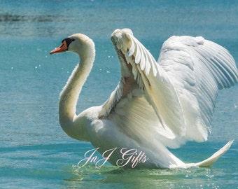 Beautiful  Swan Digital Downloadable V11