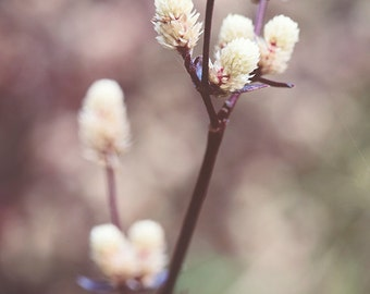 Rustic Botanical