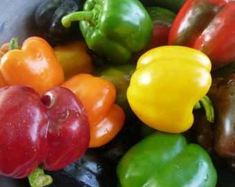 50 Heirloom Bell Pepper Seeds.Mixed colors