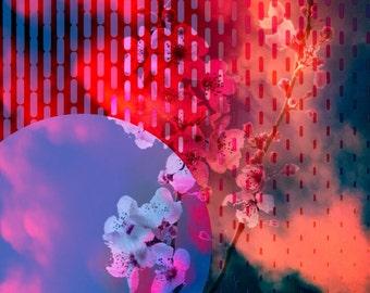 Rain Blossoms print