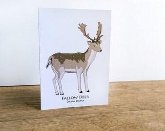 Fallow Deer Card