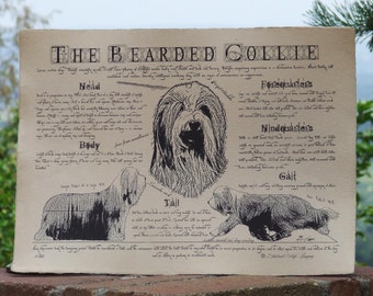 Antique styled dog standard - Bearded Collie