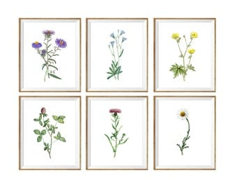Botanical Art Print SET of 6,aster art print, buttercup art print, chamomile art print, clover art print, flower, illustration, poster set 6