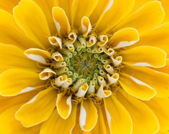 Yellow Flower close up photograph.
