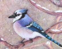 Blue Jay in Snow-Original Pastel Painting