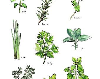Watercolour herb A4 print