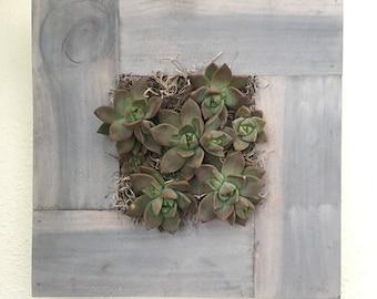 DIY Succulent Wall art frame