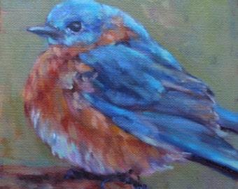 """Bluebird 6x6"""""""