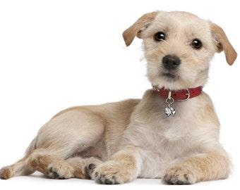 Pomeranian Dog Bling, Pomeranian Dog Collar Accessory, Dog Collar Charm, Pet Jewelry, 291