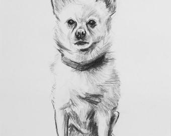 """Chihuahua Drawing - """"Cricket"""""""