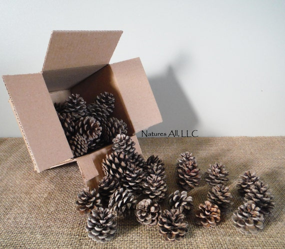 Decorative Pine Cones/Natural Pine Cones/40 Piece Box/For Rustic Wedding & Home Décor/Shipping Included: Item# PC-1000