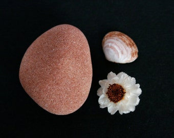 Set of Magnets - Beach Stone - Shell - Flower - Nature Collection - Small Housewarming Gift