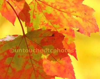 Green and Red Maple Leaves on top of Yellow Maple Leaves Photograph