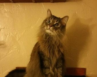 Floating Curved Cat Perch  / Shelf W/ hidden brackets