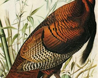 Audubon Wild Turkey  Bird American Fine Art Poster Repro FREE SHIPPING in USA
