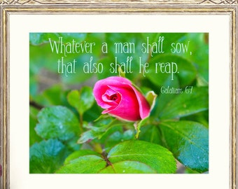 SALE*BUY2GET1FREE* Pink RoseBud Bible Verse, Photography Scripture Digital, Instant Download, Man Shall Sow, Christian Quote, Galatians 6v7