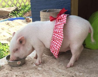 Country girl! Pet Tutu, Mini Pig Clothes, Pig Clothes, Gingham