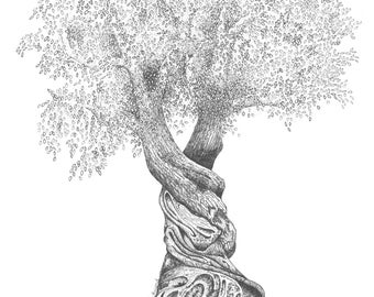 Olive Tree (2): Print of Original Pen & Ink Drawing