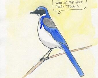 The Western Scrub Jay