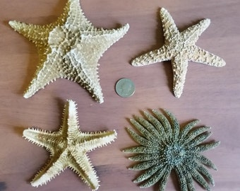 Collection of Real Sea Stars