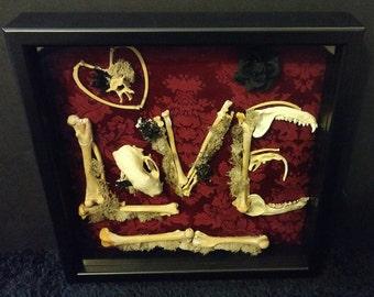 Bone Love Shadowbox Display