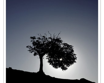 Pin - Kofinou ( carob tree, color, landscape, minimal, sunrise, color, limited unlimited edition, Cyprus, art print, Mediterranean, photo )