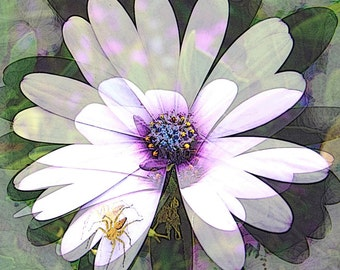 Card - Daisy with spider
