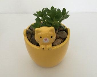 Animal Cat Pot with Succulent Plant