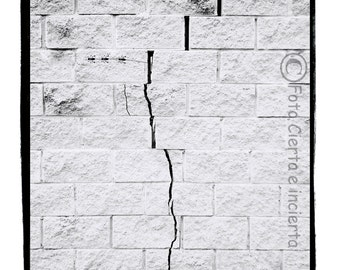 5 ants (Fine art photography, graffiti, street art, wall, white, ants, crack, force, insects)