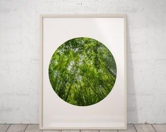 Bamboo Art, Tropical Print, Nature Prints, Bamboo Print, Green Wall Decor, Circle Print, Nature Photography, Green Fine Art, Bedroom Decor