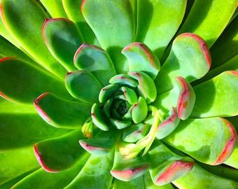 Forever Succulent