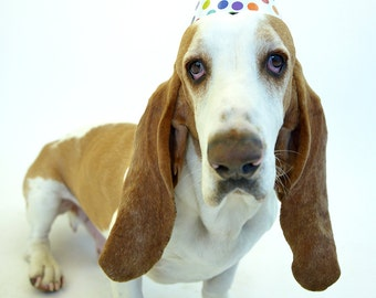 Basset Hound Party Hat