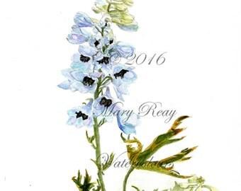 Pale blue delphinium Original botanical print by Mary Reay, A4, delphinium illustration, blue painting print, blue flowers, botanical print