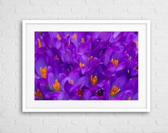 Saffron Flower Art Photo Framed