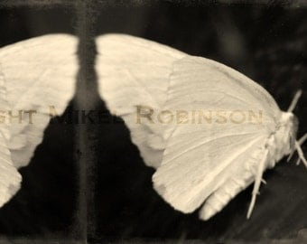Paper Wing Moth Wings. Insect. Antique. Original Digital Art Photograph. Wall Art. Wall Decor Moth Print. DOUBLE TWILIGHT by Mikel Robinson