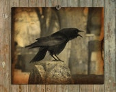 Raven Image, Blackbird Cawing, Gothic Wall Decor, Crow Photograph, Dark Tones, Halloween Art, Aged Colors - Haunting Caw