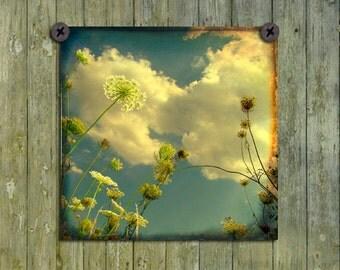 Retro Colors, Sky, Aged Art Photograph, Flora, Queen Anne's Lace, Meadow, Field Plants Print, Nature Art - Through The Queens