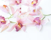 OVERSTOCK SALE: 9 Cymbidium Orchids in Pink with Burgundy Center - Silk Artificial Flowers - Artificial Orchids. was 11.50