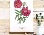 Floral Canvas art - Peony Study - Canvas Art - Botanical cotton canvas
