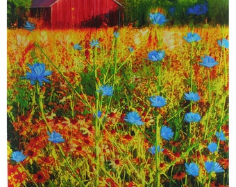 Prairie view, 16x20 inches, flower prairie, #red barn, flowers, #art, blue flowers, nature photography, mixed media original #Art #Flowers
