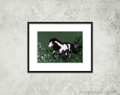 Black and White Horse Acrylic Painting - A Little Appaloosa Painting - Horse in a Meadow - Gift for Horse Lover - Animal Painting  Horse Art