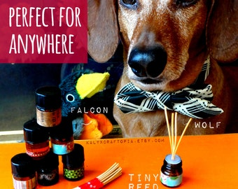 baxter and duk duk's super tiny smelly reed diffuser ambient aroma experience set