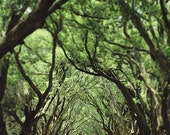 "Louisiana ""Canopy of Oaks"" Photograph. Affordable Home Decor. Oak Alley Antebellum. 8x10, 11x14, 16x20, 20x24, 24x30, 30x40"