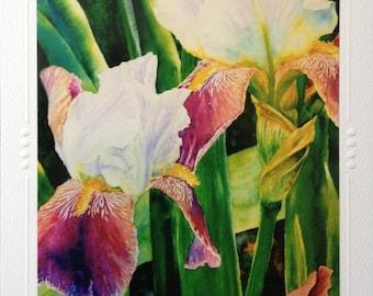 SET OF 5 Iris Flower Art Greeting Note Card, Blank Beautiful Spring Bearded Flowers Watercolor painting Art print By Christie Marie Elder