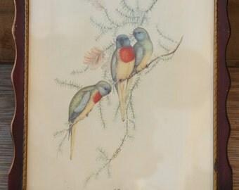 Vintage 40s-50s Bird Print/ Framed Art Work/ Wall Art/Retro/ Woodland /Mid Century/Bohemian
