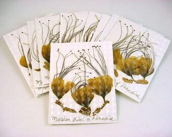 Mexican Bird of Paradise Note Cards - Handmade Set of 10 Blank Inside Cards & Envelopes --Caesalpinia pulcherrima, Pride of Barbados