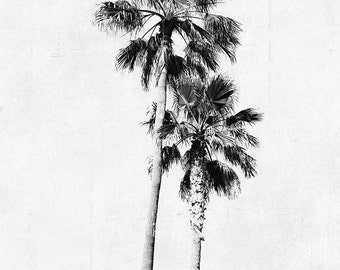 "Palm Tree Photograph, Vertical Print, Black and White Art, Large Wall Art, Photography, Palm Tree Decor, Minimalist, Gray White ""Two Palms"""